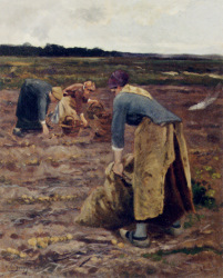 The Potato Gatherers