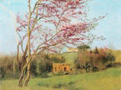 Landscape - Blossoming Red Almond