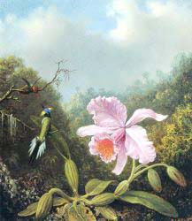 Fighting Hummingbirds With Pink Orchid