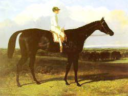 Jonathan Wild - A Dark Bay Race Horse At Goodwood