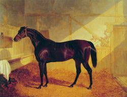 Mr Johnstone-s Charles XII In A Stable