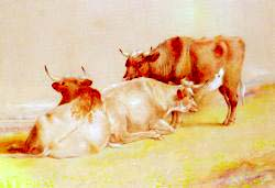 Cattle Resting 1