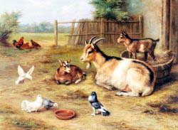 A Farmyard Scene With Goats, Chickens and Doves