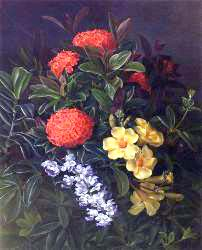 Allemanda, Ixora And Orchids