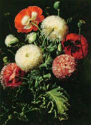 Still Life With Pink, Red And White Poppies