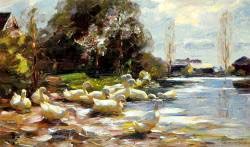 Ducks On A Riverbank On A Sunny Afternoon