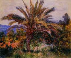 A Palm Tree At Bordighera - 1884