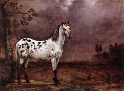 The Spotted Horse