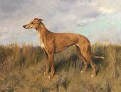 Henrietta Horn A Greyhound