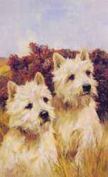 Jacque And Jean Champions Westhighland White Terriers
