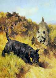 Two Scotties In A Landscape