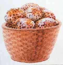 Basquet Of Shells
